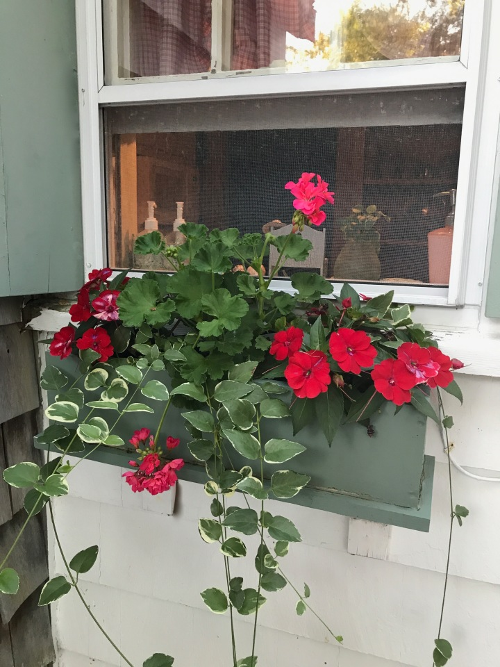 kitchen windowbox