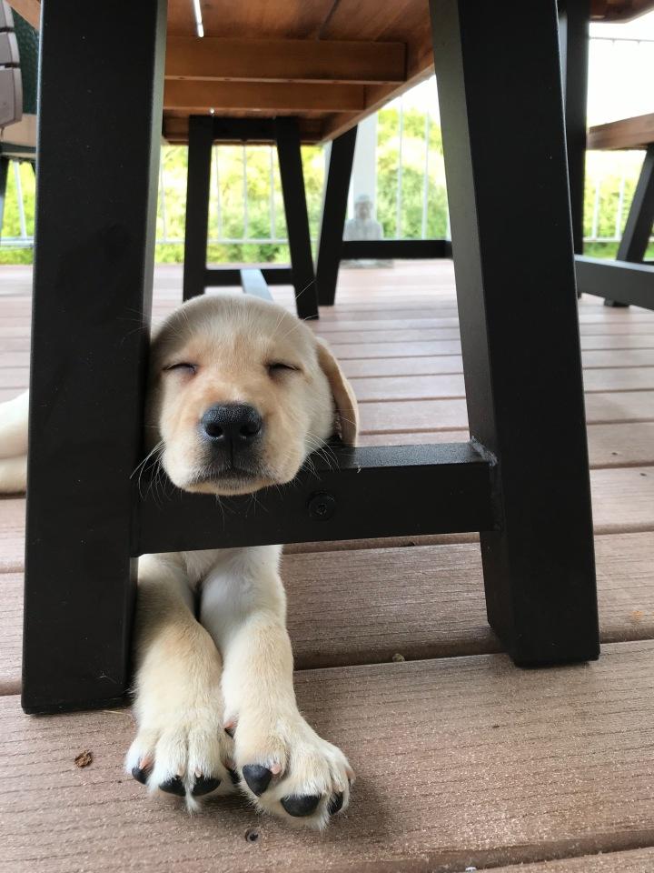 raffa sleeping